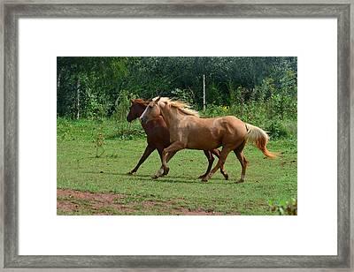 Two Horses In Unison  - 7221d Framed Print by Paul Lyndon Phillips