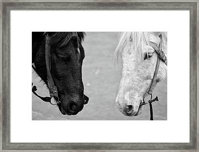 Two Horses Framed Print by Sayantan Mitra