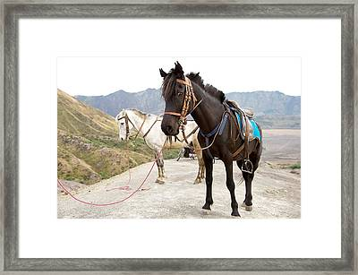 Two Horses Framed Print by Yew Kwang