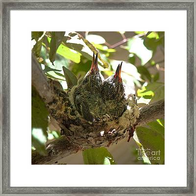 Two Hummingbird Babies In A Nest 3 Framed Print by Xueling Zou