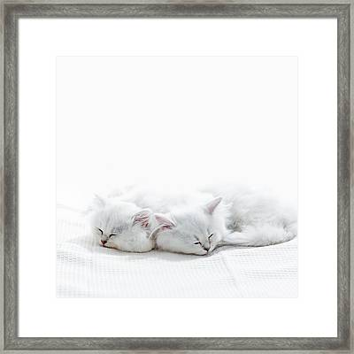 Two Kittens Sleep. Framed Print by Ultra.f
