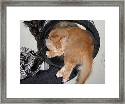 Two Kittens Framed Print by Val Oconnor