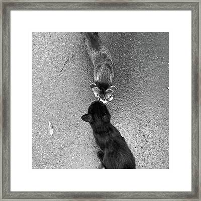 Two Kittens Which Kiss Framed Print by photographer, loves art, lives in Kyoto
