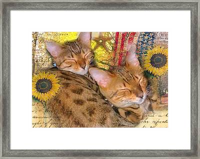 Two Kitties Sitting In A Tree Framed Print