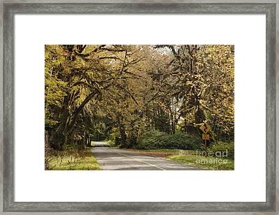 Two Lane Road Passing Under Trees Framed Print