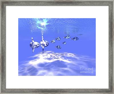 Two Large Sunfish Swim With A Group Framed Print