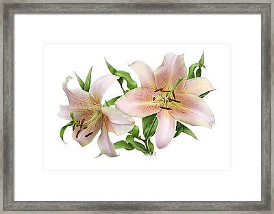 Two Lilies Framed Print by Artellus Artworks