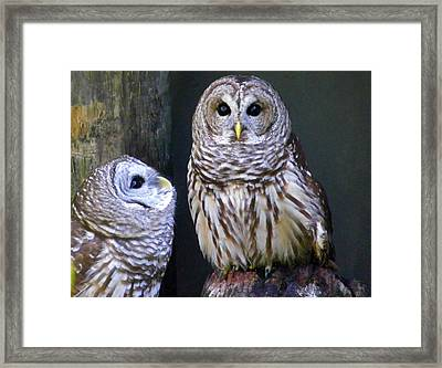 Two Little Owls Framed Print