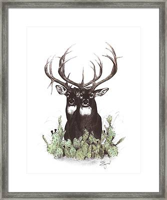 Two Of A Kind Framed Print by Steve Maynard
