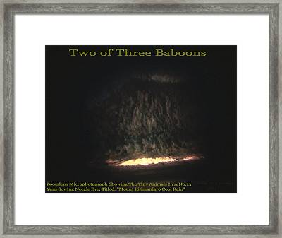 Two Of Three Baboons  Framed Print by Phillip H George