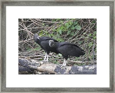 Framed Print featuring the photograph Two Old Buzzards by Cheryl McClure