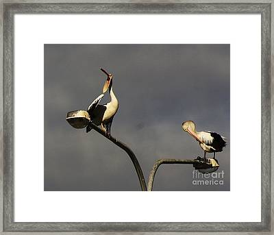 Framed Print featuring the photograph Two On A Pole by Blair Stuart