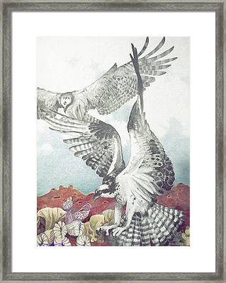 Two Ospreys Framed Print