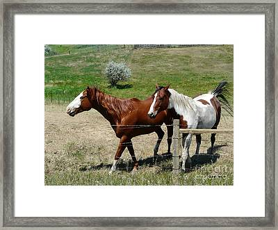 Two Pals Framed Print by Bobbylee Farrier