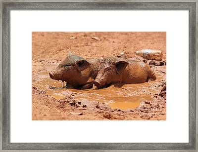 Framed Print featuring the photograph Two Pigs In A Puddle by Nola Lee Kelsey
