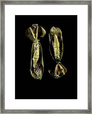 Two Praying Mantises Framed Print by Volker Steger