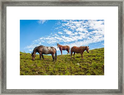 Two Quarters And An Appaloosa Framed Print
