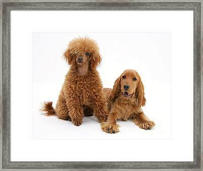 Two Red Dogs Framed Print