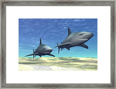 Two Sharks On Patrol Over A Sandy Reef Framed Print by Corey Ford