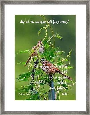 Two Sparrows For A Penny Framed Print by Paula Tohline Calhoun