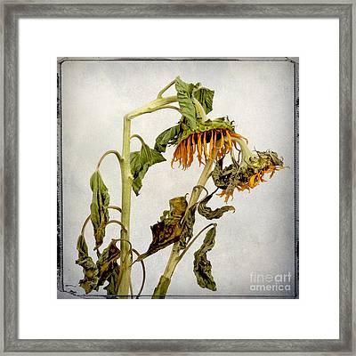 Two Sunflowers Framed Print by Bernard Jaubert