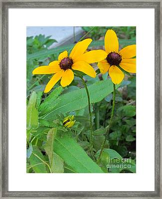 Two Sunny Framed Print