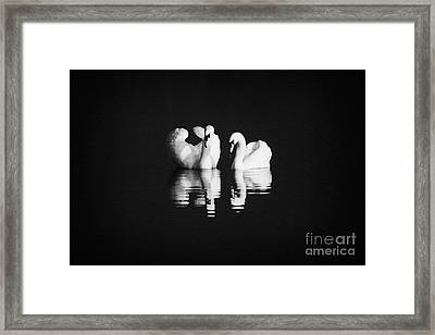 Two Swans Swimming Framed Print by Joe Fox