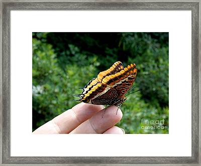 Framed Print featuring the photograph Two Tailed Pasha by Lainie Wrightson
