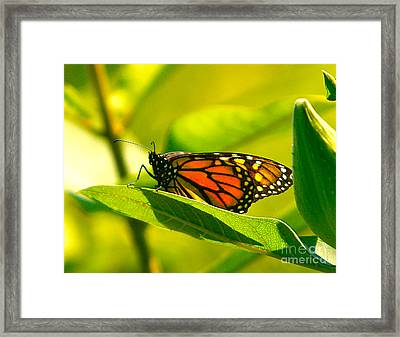 Two Times Framed Print by Robert Pearson