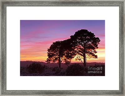 Two Trees In The New Forest At Sunset Framed Print by Richard Thomas