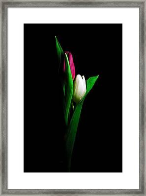 Two Tulips  Framed Print by Elsa Marie Santoro