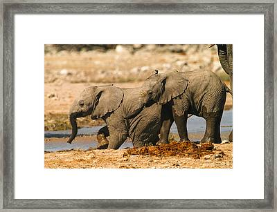 Two Up Framed Print