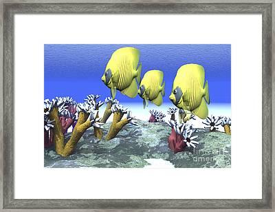 Two Yellow Butterflyfish Swim Among Framed Print