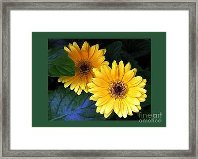 Two Yellow Dahlias Framed Print by Dale   Ford