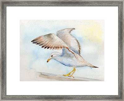 Tybee Seagull Framed Print