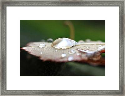 Framed Print featuring the photograph UFO by Scott Holmes