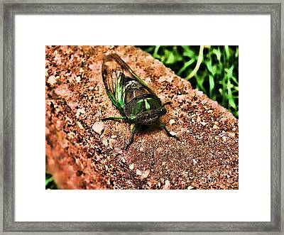 Ugh A Bug Framed Print by Colleen Kammerer