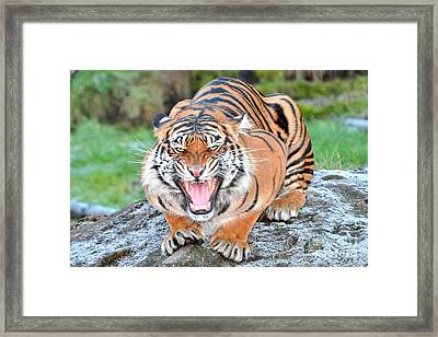 Uh Oh Framed Print by Jack Moskovita