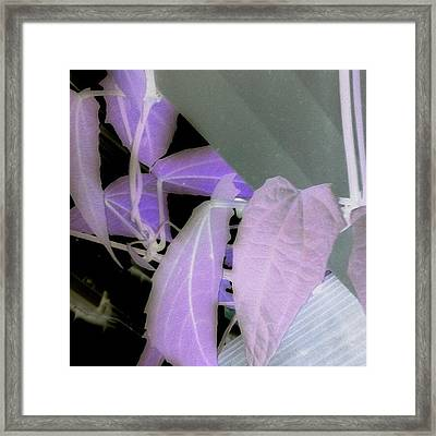 Ultraviolet Framed Print