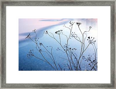 Umbelliferae Silhouettes In Front Of Frozen Lake Framed Print