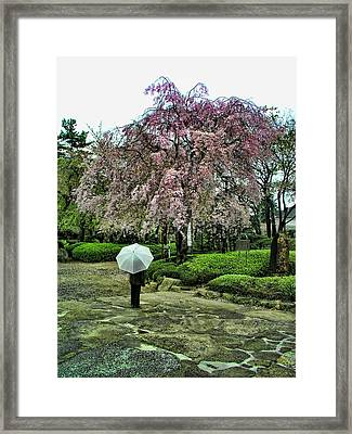 Umbrella With Cherry Blossoms Framed Print