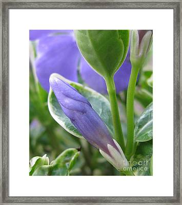 Unabated Framed Print by Tina Marie