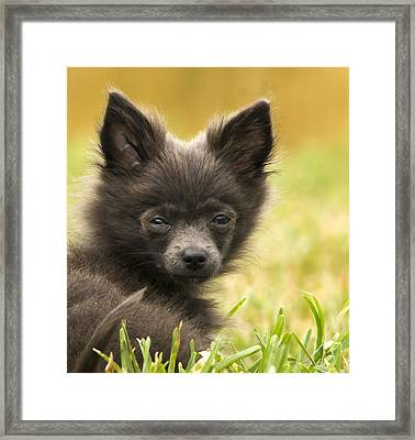 Unconditional  Framed Print by Cory Bucher