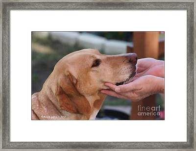 Unconditional Love Framed Print by Alice Lero