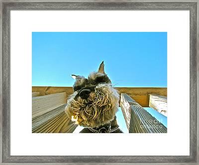 Under Dog Framed Print by Arthur Hofer