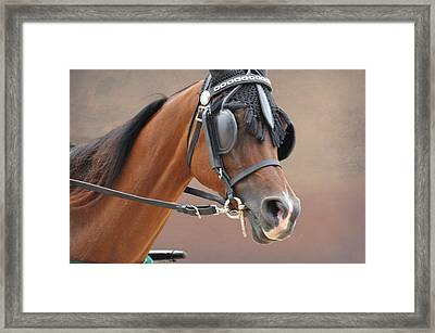 Under Harness Framed Print by Jan Amiss Photography