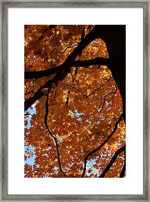 Under The Canopy Framed Print by Lyle Hatch