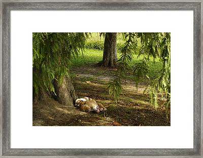 Under The Cypress Tree Framed Print by Larry Eddy