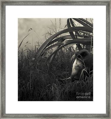 Under The Lily Leaves Framed Print