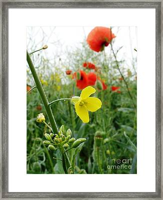 Under The Morning Dew Framed Print by AmaS Art